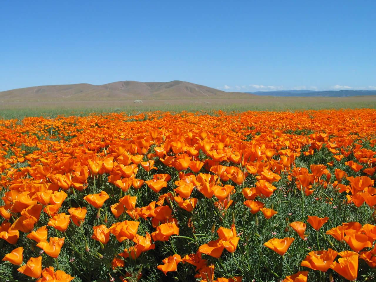 Fleur desert les chumballs une s rie d aventure et d for Les fleur
